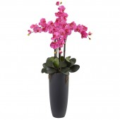 Phalaenopsis Orchid Arrangement with Bullet Planter - Dark Pink