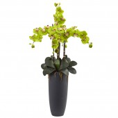 Phalaenopsis Orchid Arrangement with Bullet Planter - Green