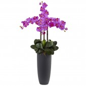 Phalaenopsis Orchid Arrangement with Bullet Planter - Orchid