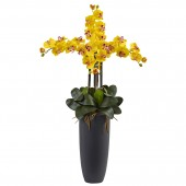 Phalaenopsis Orchid Arrangement with Bullet Planter - Yellow