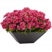 Geranium with Black Planter UV Resistant (Indoor/Outdoor) - Beauty